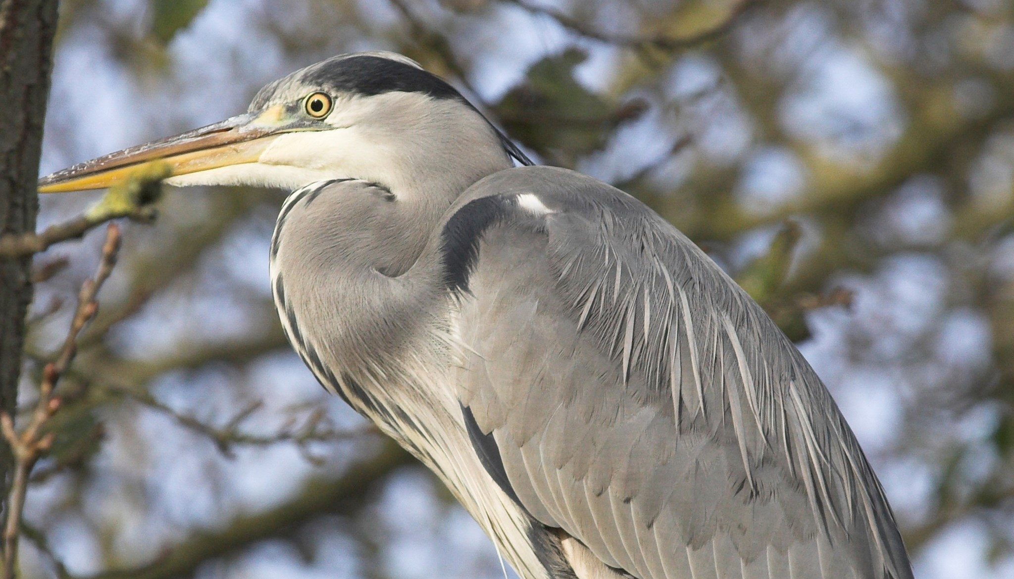 Herons Wildlife blog.jpg